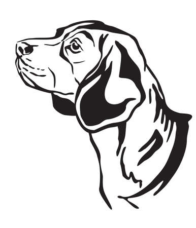 Decorative outline portrait of Beagle Dog looking in profile, vector illustration in black color isolated on white background. Image for design and tattoo.