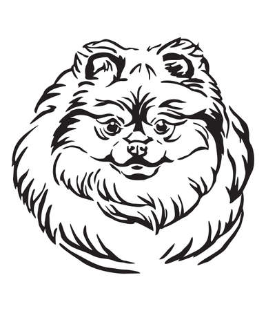 Decorative outline portrait of Pomeranian Dog, vector illustration in black color isolated on white background. Image for design and tattoo. Ilustrace