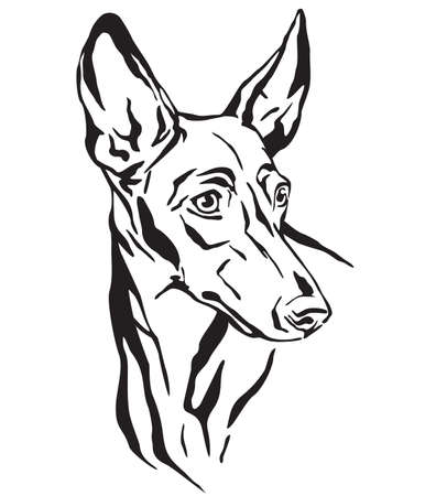 Decorative outline portrait of Cirneco dell' Etna Dog looking in profile, vector illustration in black color isolated on white background. Image for design and tattoo.