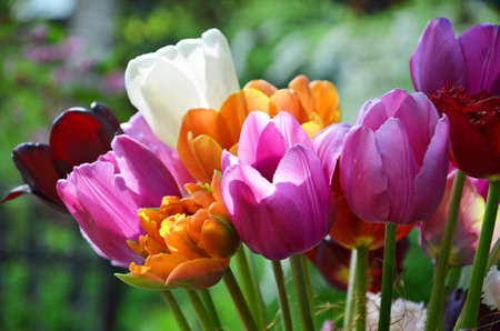 Colorful flowering different tulip flowers bouquet in sunny day. Spring concept with bouquet of multicolored tulips.