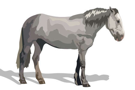 Vector colorful Illustration grey horse standing in profile. Monochrome vector sketch illustration isolated on white background.