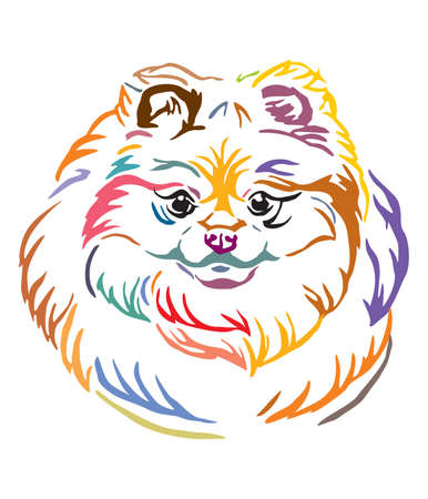 Colorful decorative outline portrait of  Pomeranian Dog, vector illustration in different colors isolated on white background. Image for design and tattoo. Illustration