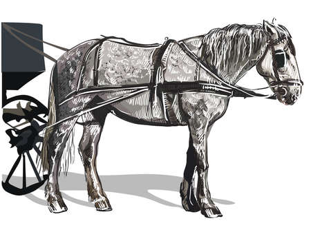 Vector hand drawing colorful Illustration horse standing in profile. Monochrome vector sketch hand drawing  illustration isolated on white background.