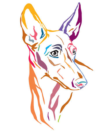 Colorful decorative outline portrait of Cirneco dell Etna Dog looking in profile, vector illustration in different colors isolated on white background. Image for design and tattoo.