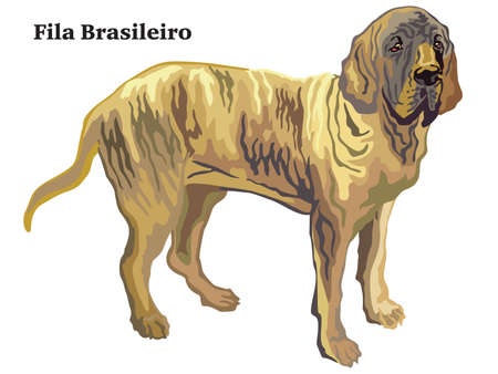 Colorful decorative portrait of standing in profile Fila Brasileiro, isolated illustration on white background