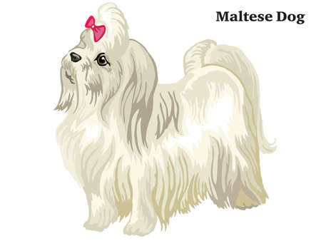 Colorful decorative portrait of standing in profile Maltese dog, isolated illustration on white background  イラスト・ベクター素材