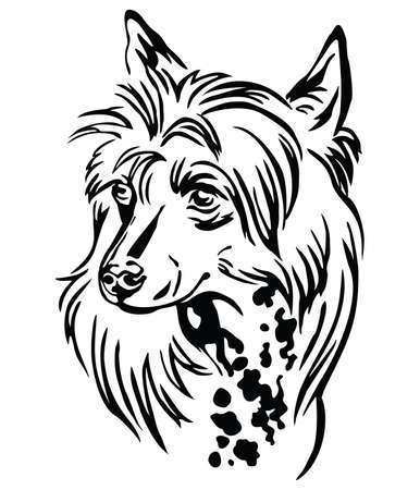 Decorative outline portrait of Chinese Crested Dog, illustration in black color isolated on white background. Image for design and tattoo.