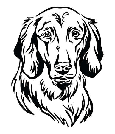 Decorative outline portrait of Dog Longhaired Weimaraner, illustration in black color isolated on white background. Image for design and tattoo.  イラスト・ベクター素材