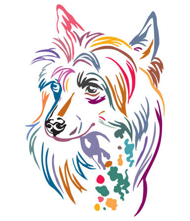Colorful decorative outline portrait of Chinese Crested Dog, illustration in different colors isolated on white background. Image for design and tattoo.