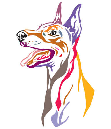 Colorful decorative outline portrait of Dobermann Dog looking in profile, vector illustration in different colors isolated on white background. Image for design and tattoo.  Ilustração