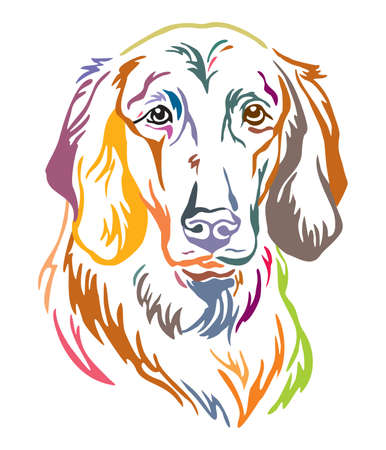 Colorful decorative outline portrait of Longhaired Weimaraner Dog, illustration in different colors isolated on white background. Image for design and tattoo. Illustration