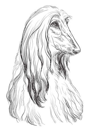 Afghan Hound Dog vector hand drawing illustration in black color isolated on white background  イラスト・ベクター素材