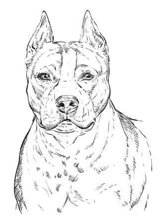 American Staffordshire Terrier vector hand drawing illustration in black color isolated on white background