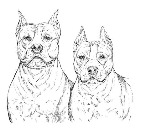 Two American Staffordshire Terriers vector hand drawing illustration in black color isolated on white background