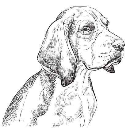 Beagle vector hand drawing illustration in black color isolated on white background