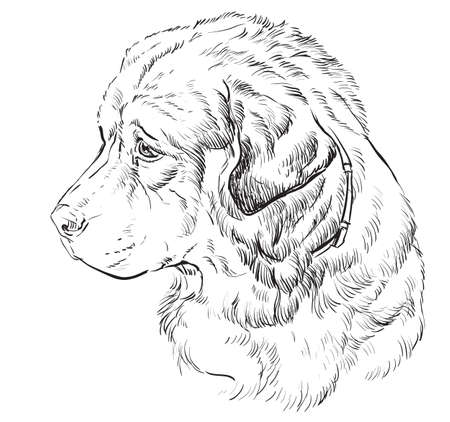 Caucasian Shepherd Dog vector hand drawing illustration in black color isolated on white background