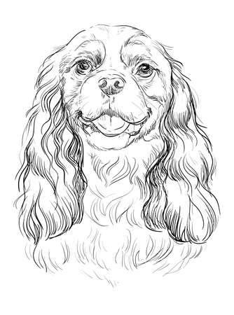 Cavalier King Charles Spaniel vector hand drawing illustration in black color isolated on white background
