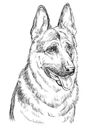 Chien de berger allemand vector illustration dessin à la main en couleur noire isolé sur fond blanc Vecteurs