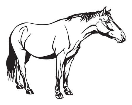 Monochrome decorative portrait of horse standing in profile, horse exterior. Vector isolated illustration in black color on white background. Image for design and tattoo. Stock Vector - 134372604