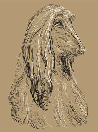 Afghan Hound Dog vector hand drawing illustration in black and white colors isolated on beige background