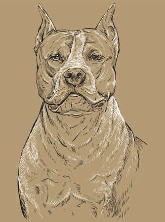 American Staffordshire Terrier vector hand drawing portrait in black and white colors. Vector illustration isolated on beige background
