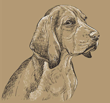 Beagle vector hand drawing illustration in black and white colors isolated on beige background  イラスト・ベクター素材