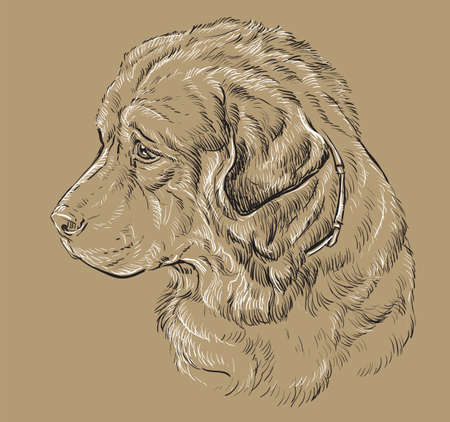 Caucasian Shepherd Dog vector hand drawing illustration in black and white colors isolated on beige background