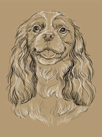 Cavalier King Charles Spaniel vector hand drawing illustration in black and white colors isolated on beige background