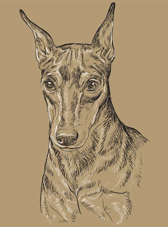 Miniature Pinscher vector hand drawing portrait in black and white colors. Vector illustration isolated on beige background