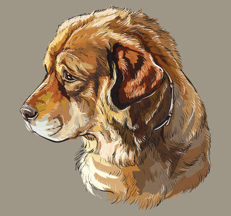 Realistic portrait of dog Caucasian Shepherd. Colorful vector hand drawing illustration isolated on grey background. Ilustração