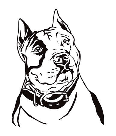 Decorative contour outline portrait of Dog American Staffordshire Terrier, vector illustration in black color isolated on white background. Image for design and tattoo.