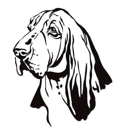 Decorative contour outline portrait of Dog Basset Hound looking in profile, vector illustration in black color isolated on white background. Image for design and tattoo.