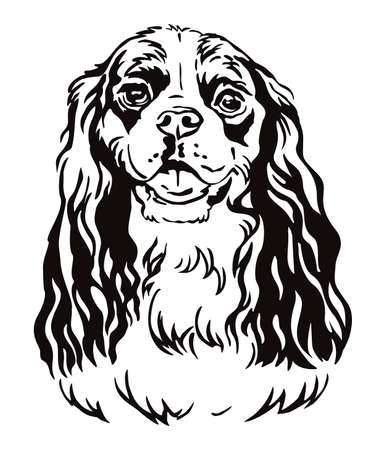 Decorative contour outline portrait of Dog Cavalier King Charles Spaniel, vector illustration in black color isolated on white background. Image for design and tattoo.