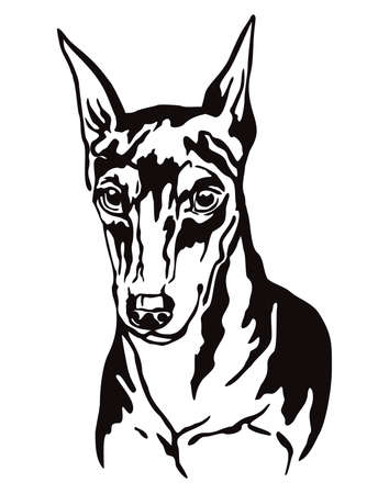 Decorative contour outline portrait of Dog Miniature Pinscher, vector illustration in black color isolated on white background. Image for design and tattoo.