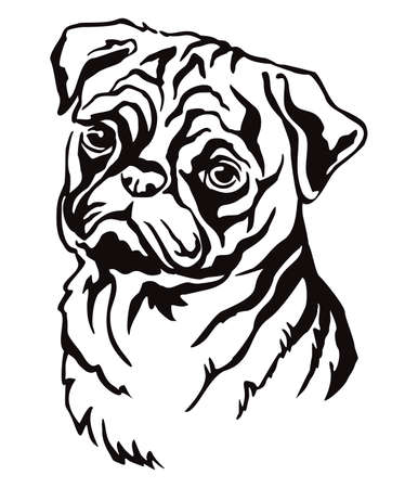 Decorative contour outline portrait of Dog Pug, vector illustration in black color isolated on white background. Image for design and tattoo.
