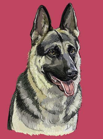 Colorful German Shepherd vector hand drawing portrait. Isolated vector illustration on maroon background. Vector realistic illustration of German Shepherd dog.
