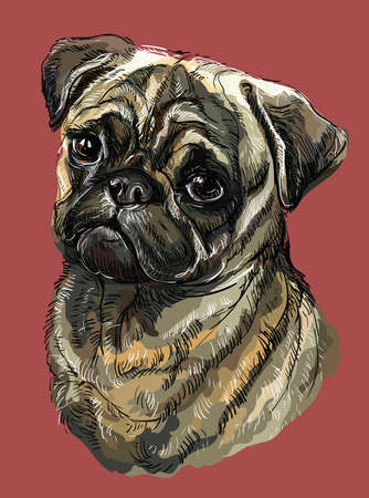 Pug vector hand drawing illustration in different color on red background