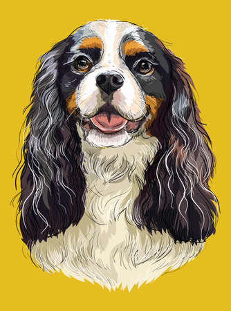 Realistic portrait of dog Cavalier King Charles Spaniel. Colorful vector hand drawing illustration isolated on yellow background.