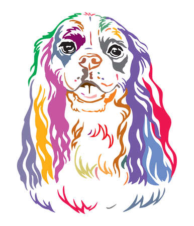 Colorful decorative contour outline portrait of Dog Cavalier King Charles Spaniel, vector illustration in different colors isolated on white background. Image for design and tattoo.