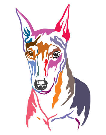 Colorful decorative contour outline portrait of Dog Miniature Pinscher, vector illustration in different colors isolated on white background. Image for design and tattoo.
