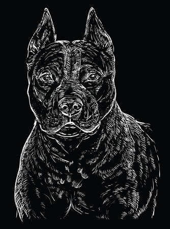 American Staffordshire Terrier vector hand drawing illustration in  white color isolated on black background Ilustrace