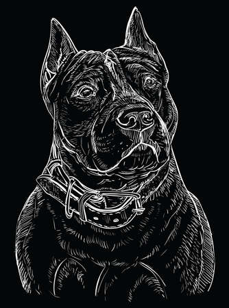 American Staffordshire Terrier vector hand drawing illustration in  white color isolated on black background  イラスト・ベクター素材