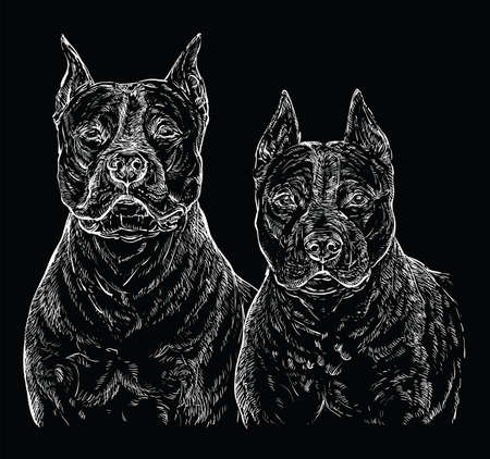 Two American Staffordshire Terriers vector hand drawing illustration in white color isolated on black background