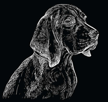 Beagle vector hand drawing illustration in white color isolated on black background  イラスト・ベクター素材
