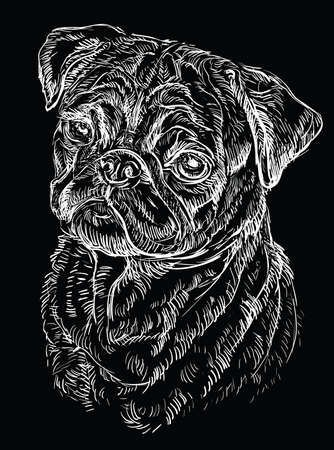 Pug vector hand drawing illustration in white color isolated on black background