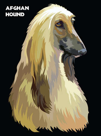 Colored portrait of Afghan Hound isolated vector illustration on black background