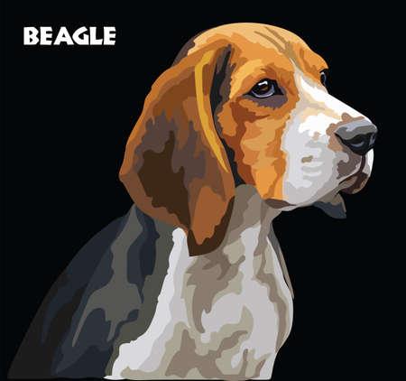 Retrato colorido del dibujo del vector de Beagle. Ilustración de vector aislado sobre fondo negro. Ilustración realista vector de perro beagle. Ilustración de vector