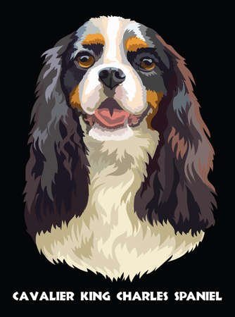 Realistic portrait of dog Cavalier King Charles Spaniel. Colorful vector drawing illustration isolated on black background.