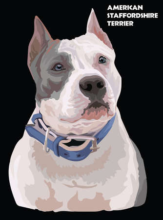 Colored portrait of American Staffordshire Terrier (Pitbull) isolated vector realistic illustration on black background