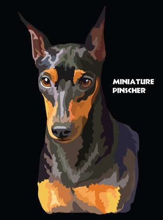 Colored portrait of Miniature Pinscher isolated vector realistic illustration on black background. Vector illustration Ilustrace